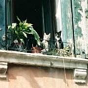 Venetian Cats Poster