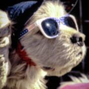 Venice Beach Dog Poster
