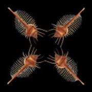 Venus Comb Geometric Poster