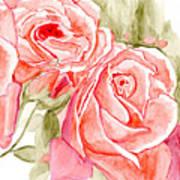 Vermilion Pink Roses Poster