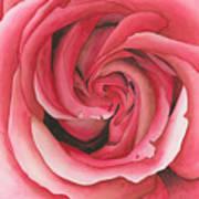 Vertigo Rose Poster by Ken Powers