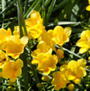 Very Sunny Yellow Flowers Poster