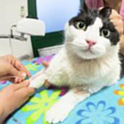 Veterinarian Cat Care Poster