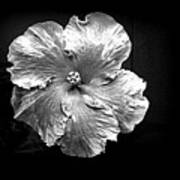 Vibrant Flower Series 3 Poster by Jen White