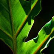 Vibrant Green Poster