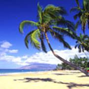 Vibrant Green Palms Poster