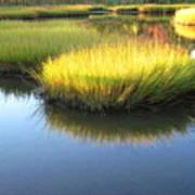 Vibrant Marsh Grasses Poster