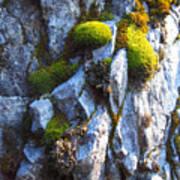 Vibrant Moss Poster