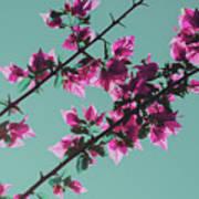 Vibrant Pink Flowers Bloom Floral Background Poster