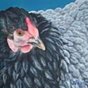 Victoria, Lavender Cochin Chicken Poster