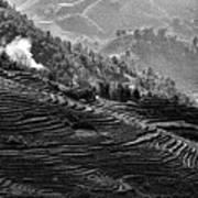 Vietnam Rice Terrain Poster