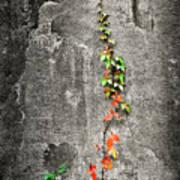 Vine In Autumn Poster