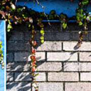 Vines On Blue Poster