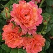 Vineyard Flowers  Poster