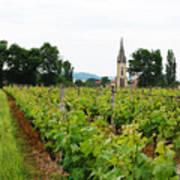 Vineyard In France Poster
