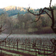Vineyard In The Winter Poster