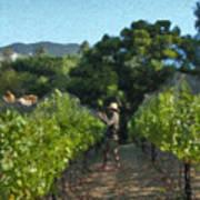 Vineyard Sauvignon Blanc Grapes Poster
