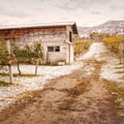 Vineyard Store House Poster
