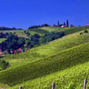Vineyards Of Jerusalem Slovenia Poster