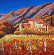 vineyards of Provence Poster