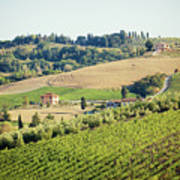 Vineyards With Stone House, Tuscany, Italy Poster