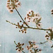 Vintage Blossoms Poster