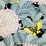 Vintage Japanese Illustration Of A Hydrangea Blossoms And Butterflies Poster