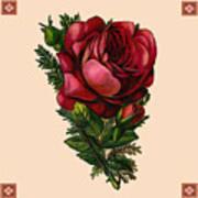 Vintage Red Rose Botanical Poster