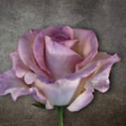 Vintage Rose On Gray Poster
