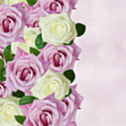 Violet  And White Roses Poster