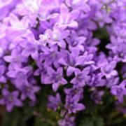 Violet Dream I Poster