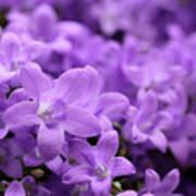 Violet Dream V Poster