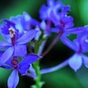 Violet Orchids Poster