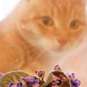 Violets with Cat Poster