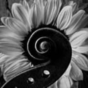 Violin Scroll And Sunflower In Black And White Poster