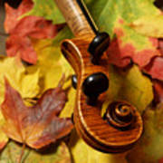 Violin Scroll With Fall Maple Leaves Poster