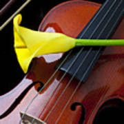 Violin With Yellow Calla Lily Poster