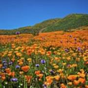 Vivid Memories Of The Walker Canyon Superbloom Poster