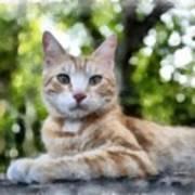 Volterra Italy Cat Watercolor Poster