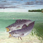 Wade Fishing For Speckled Trout Poster