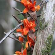 Waimea Flowers Poster
