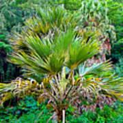 Waimea Palm Study 2 Poster