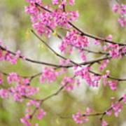 Waking Blooms Poster