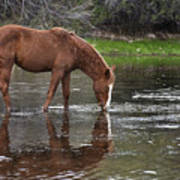 Walk Horse In Salt River Poster