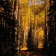 Walking With Aspens Poster