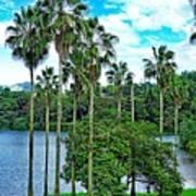 Waokele Pond Palms And Sky Poster