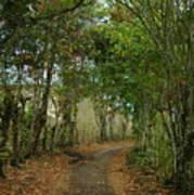 Wariman Pathway Poster