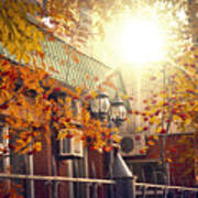 Warm Autumn City. Warm Colors And A Large Film Grain. Poster
