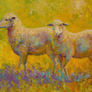 Warm Glow - Sheep Pair Poster
