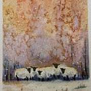 Warm Winter Sheep Poster